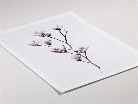 Cleanly designed poster with magnolia | Print with photo