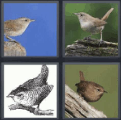 4 pics 1 word four pictures of birds - All answers UPDATED!!!