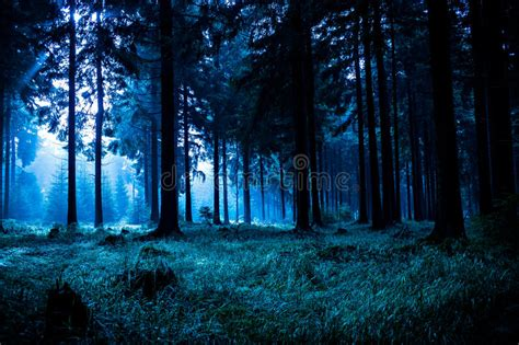 Night forest stock image