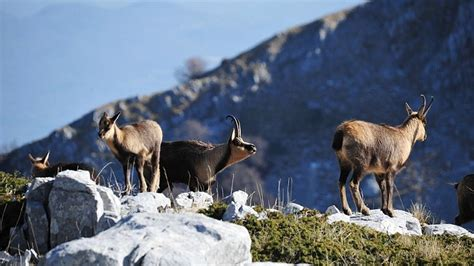 5 species you can only admire in Italy | LifeGate